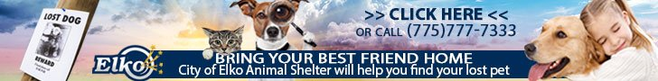 Bring your lost pet home with City of Elko's Animal Shelter